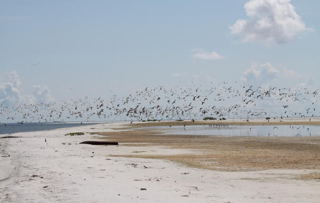 Coastal Bird Stewardship Program